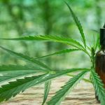 Uso medicinal da maconha gera discussão entre deputados de MT
