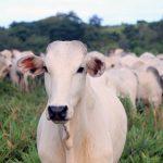 Organização Mundial de Saúde Animal conclui que casos de vaca louca no Brasil não oferecem risco